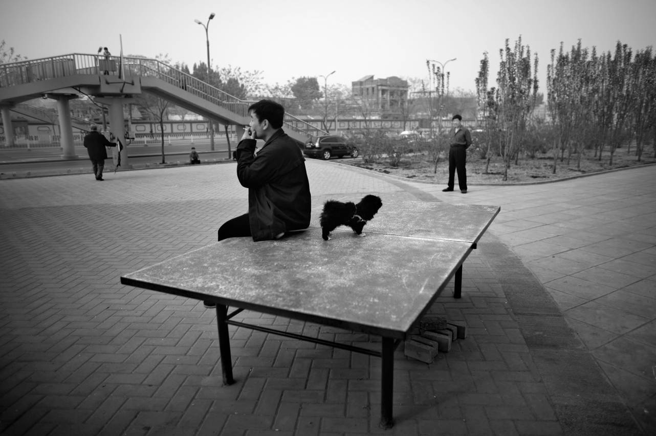 ping pong004